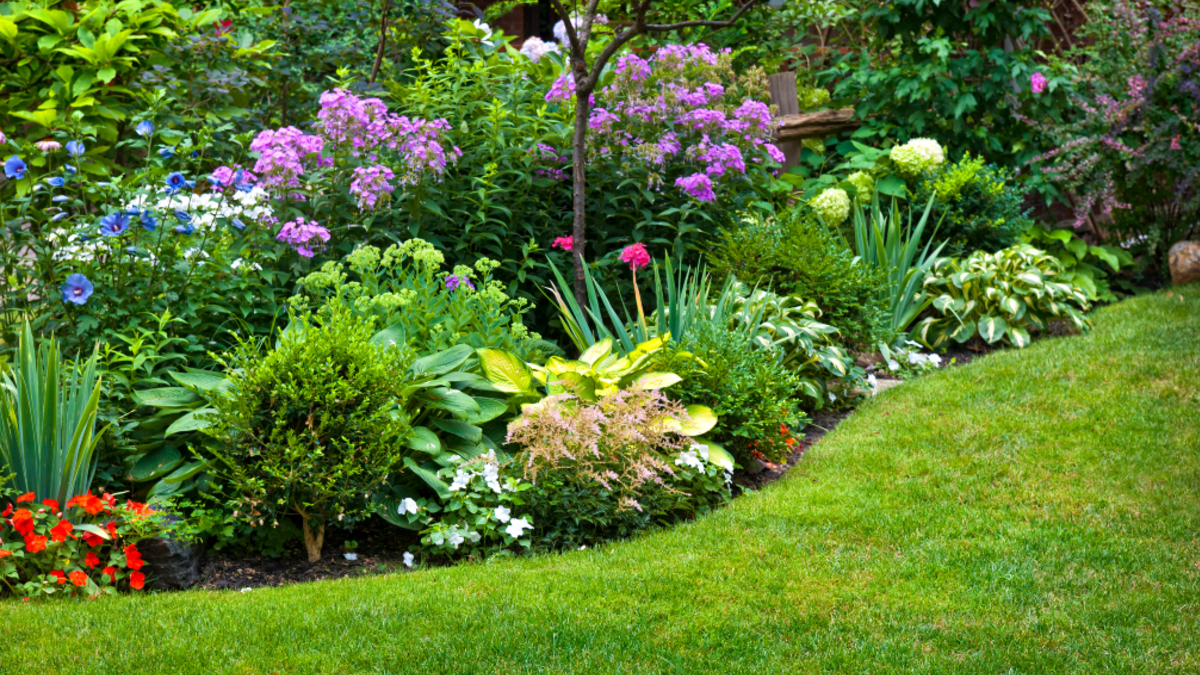 Five Low-Maintenance Outdoor Plants